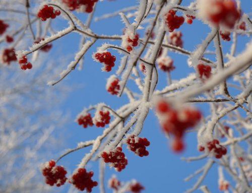 Ein Spaziergang in der Wintersonne