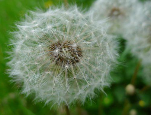 Dem verborgenen Herz der Samen lauschen